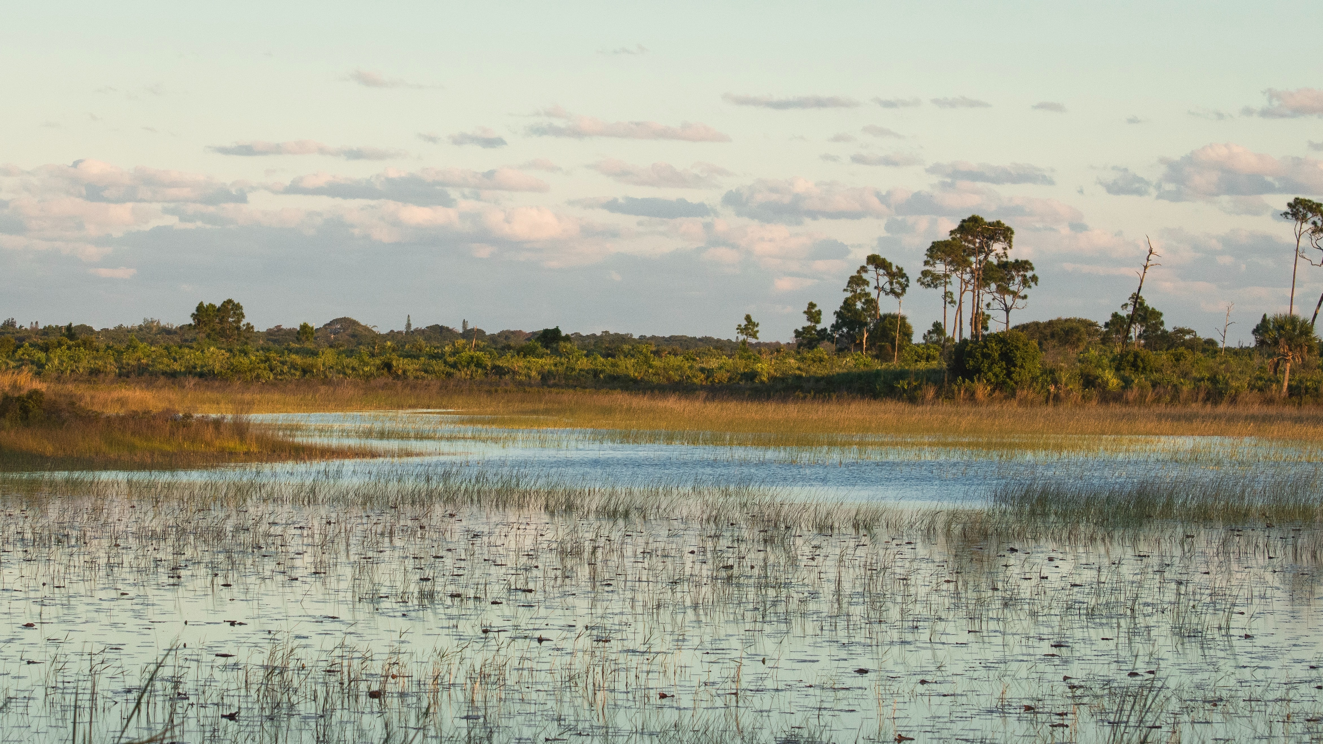 Shotley marshes