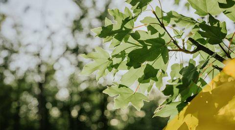 blogmainimagetemplate leaves