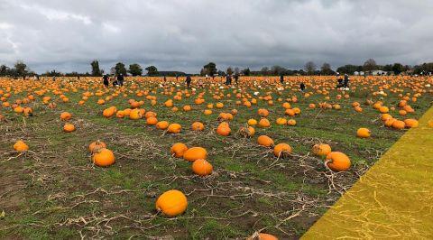 blogmainimagetemplate pumpkins