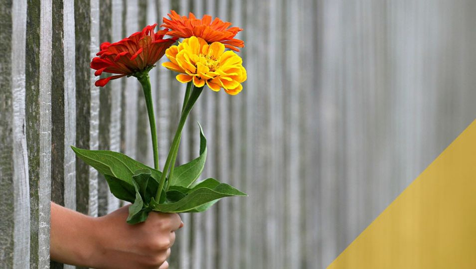 blogmainimagetemplate flowers