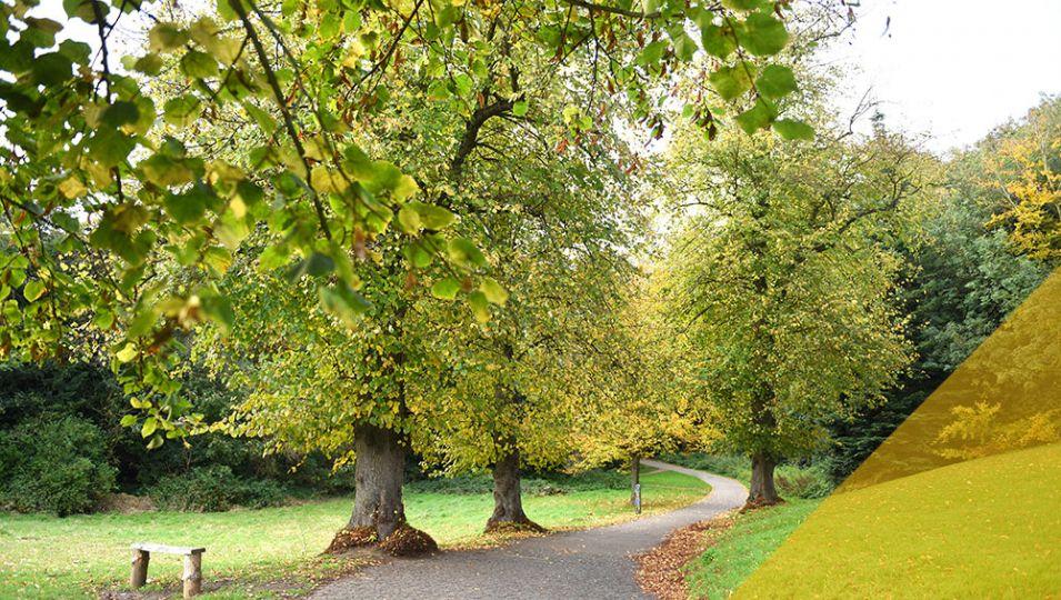 holylwells-park