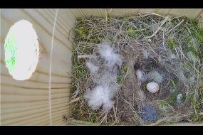 Nesting box 1 University of Suffolk