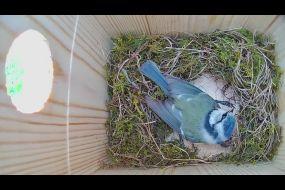 Nesting box 2 University of Suffolk