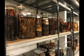 Visit to the National History Museum and the Linnean Society 4