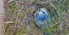 Nesting box 3 University of Suffolk